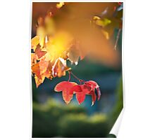 Autumn Leaves - 3 Poster