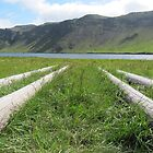 Logs at Heiarvatn, Southern Iceland by k8em
