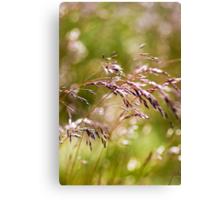 Rolling Grasslands - Puttenham Common Canvas Print