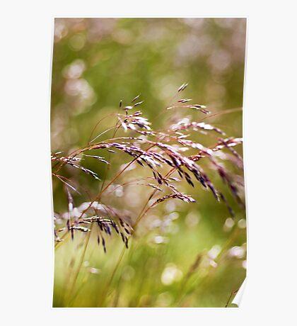 Rolling Grasslands - Puttenham Common Poster