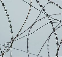 Wire at Robben Island (Color) by idubrawsky