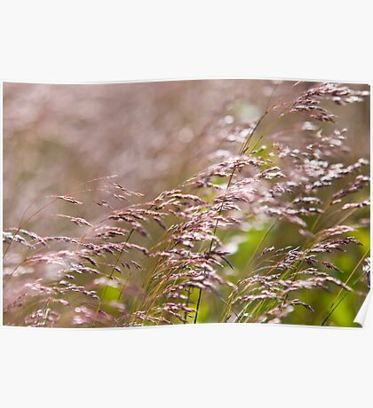 Shining Grasslands - Puttenham Common Poster