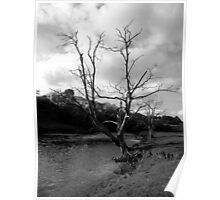 Tree on the River Wharfe Poster