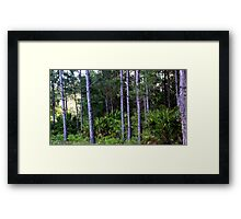 Florida Brush--Completely Unedited. Framed Print
