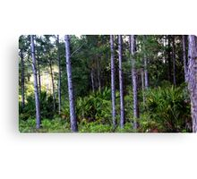 Florida Brush--Completely Unedited. Canvas Print
