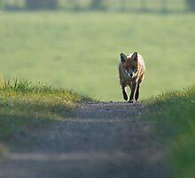 Fox Trot by Nigel Tinlin