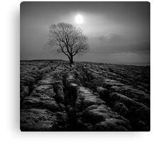 Malham Tree 01 - Yorkshire Dales, UK Canvas Print