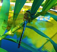 The Dragonfly by DionNelson