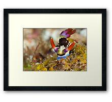 Colourful critter Framed Print