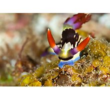 Colourful critter Photographic Print