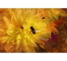Nectar for Life Photographic Print