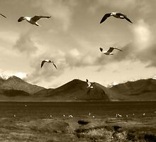The Great Gull Escape by Corri Gryting Gutzman