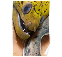 Smiley Eel Poster