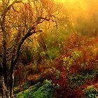 Back Hill XV, Ukiah, Ca. by Ascender Photography