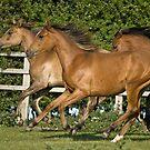 Foals: Wahiba, Samska, Kallista by laurav