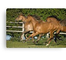 Foals: Wahiba, Samska, Kallista Canvas Print
