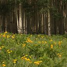 Flowers and Aspens trees on the San Francisco Mountain Peaks. by mikepemberton
