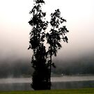 Tree in the mist by Jason Dymock