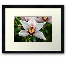 Orchid - NYBG Orchid Show 2011 Framed Print