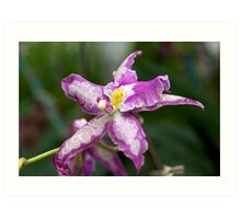 Purple Orchid - NYBG Orchid Show 2011 Art Print