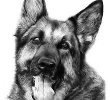 German Shepherd by onlypencil