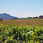 Russian River Valley Winery in Northern California by artstoreroom