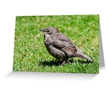 Fledgling Starling Greeting Card
