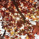 Fall colors. by mikepemberton