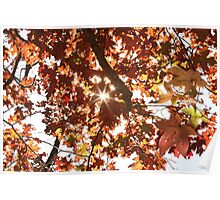 Fall colors. Poster
