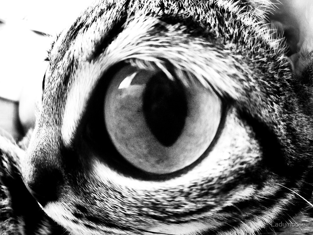 Eye Eye by Ladymoose