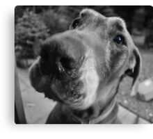 Scooby-blue Canvas Print