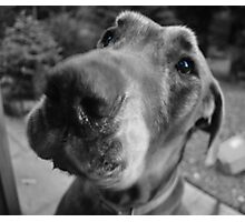 Scooby-blue Photographic Print