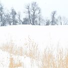Snowy Canandaigua Tree Row by triplelll