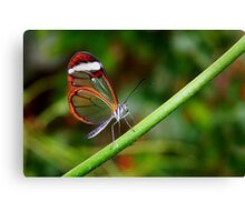 In Balance Glasswing - Greta oto Canvas Print