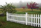 Morning Mist - Apple Blossoms and White Picket Fence by T.J. Martin