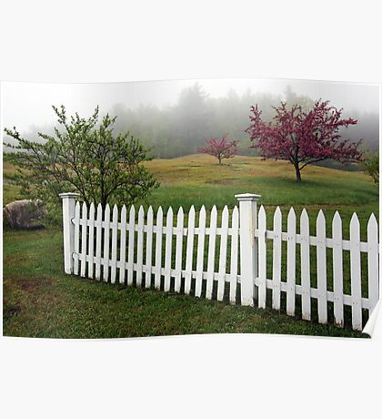 Morning Mist - Apple Blossoms and White Picket Fence Poster