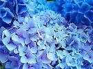 Blue Hydrangea Flowers Floral art prints Baslee Troutman by BasleeArtPrints