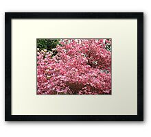 Trees Pink Dogwood Flowers art prints Baslee Troutman Framed Print