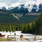 Mountains and horses in Banff, Canada by John Taylor