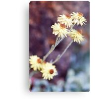 Little Daisies Together Metal Print