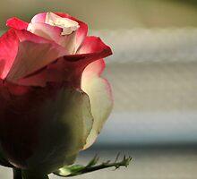 I Say, Love It Is A Flower by Joanne  Bradley