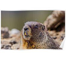 It's Marmot Season Poster