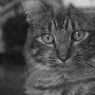Kit Kat the Cat by Becky Trudell
