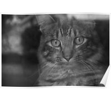 Kit Kat the Cat Poster