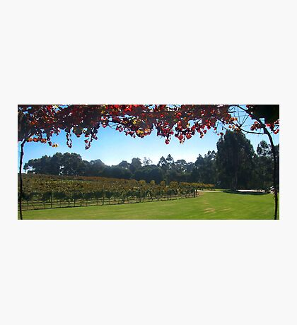 Margaret River Winery views Photographic Print