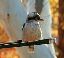 Bird On A Wire by Kezzarama