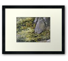seaweed and rocks Framed Print