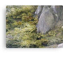 seaweed and rocks Metal Print