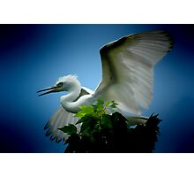 Heron on tree-Orlando, Florida Photographic Print