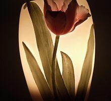 My lamp by irmajxxx
